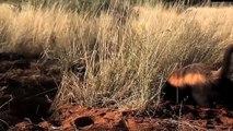 Honey Badger Narrates- The Crazy Nastyass Honey Badger Still At It