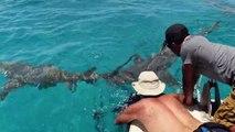 +/- 5 mètres - 3e épisode, Plonger avec les requins