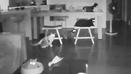 Scared Cats Scramble During Earthquake