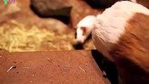 밀양출장안마 -후불1ØØ%ョØ1ØZ7467Z4367{카톡RQ43} 밀양전지역출장마사지 밀양오피걸 밀양출장안마 밀양출장마사지 밀양출장안마 밀양출장콜걸샵안마 밀양출장아로마 밀양출장∏≟⊇