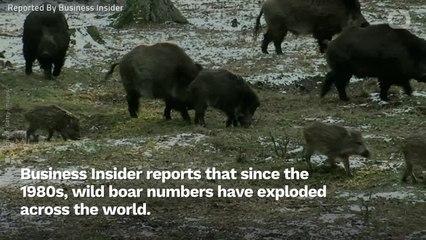 Godzilla Isn't Terrorizing Cities, But These Wild Animals Are