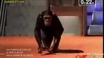 Ninja Warrior : au Japon, un singe éclate le record de l'émission