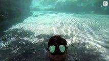 Diver Jordan Wylie films himself swimming under a large alligator in Florida