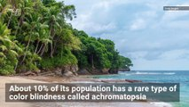Rare Color Blindness Affects 10% of People on 'Island of the Colorblind'