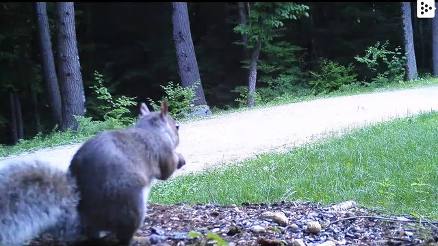 A squirrel moves in the 'Bum Bum Tam Tam' style in front of a camera