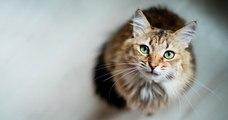 Une femme perd son chat sur une aire d'autoroute et le retrouve un mois après !