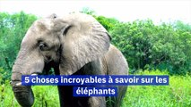 Journée internationale des éléphants 5 choses incroyables à savoir