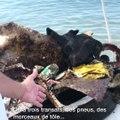Episode 2. Ces Azuréens se battent pour une Méditerranée propre (2/4)
