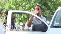 """En Tunisie, les saveurs du legmi, fragile """"cadeau"""" du palmier dattier"""