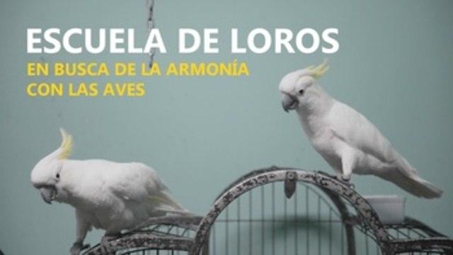 Busca Armonía Escuela Entre Y Esta Aves Personas La R5qc34ALj
