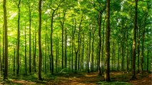 How Trees Just Might Help Save The World