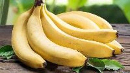 Deadly Fungus Drives Bananas Closer to Extinction