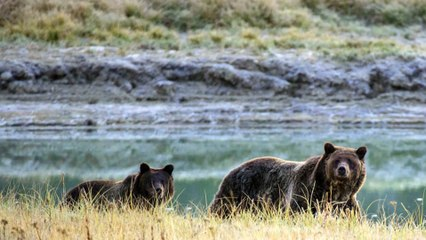 Trump Administration Set to Weaken Endangered Species Act