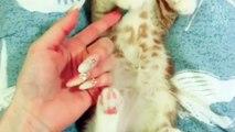 ce petit chaton aodre être bordé quand il dort