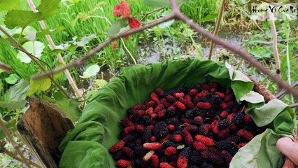 How Vietnamese Make Mulberry Siro - Delicious Potation For Hot Summer Day