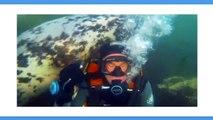 La vidéo de ce plongeur avec une otarie fait fondre les internautes