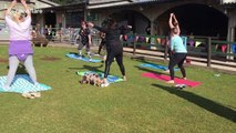 UK farm offers pilates classes surrounded by pigs
