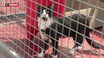 Les refuges de la SPA débordés par l'afflux d'animaux abandonnés