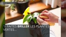 Plantes d'intérieur : ces astuces pour les maintenir en pleine santé