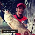 Huge fish from Pasig River not safe to eat