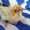 Trop cute ! Admirez cette perruche sublime avec son chapeau