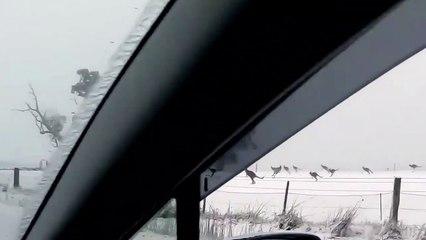 Já alguma vez viste cangurus a saltar na neve? Aconteceu mesmo e foi... na Austrália!
