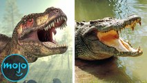 Top 10 Animals That Survived What Dinosaurs Couldn't