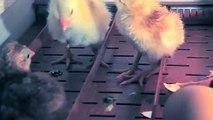 의왕출장안마 -후불100%ョØ1ØM7685M6221{카톡MGM1472}  의왕전지역출장안마 의왕오피걸 의왕출장마사지 의왕안마 의왕출장마사지 의왕콜걸샵す≃◢