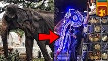 Sedih, foto gajah kurus yang dipaksa berparade di Sri Lanka - TomoNews