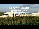 En Russie, un Airbus percute des mouettes et atterrit dans un champs de maïs