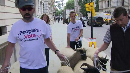 Sheep herded along Whitehall in anti-Brexit protest