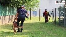 VIDEO. Blois : des chiens policiers très entraînés