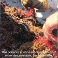 Episode 4. Ces Azuréens se battent pour une Méditerranée propre (4/4)