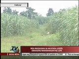 Some Luisita farmers dismayed at SC referendum