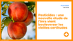 Pesticides : une nouvelle étude de l'Inra vient bouleverser les vieilles certitudes
