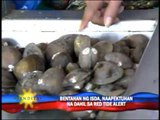 Red tide affects seafood sales in Metro