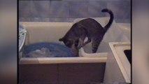 Assistant cat