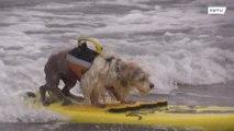 Los mejores perros de surf del mundo surfean las olas en California
