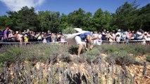 Sault : la lavande, or bleu de Provence, fait sa fête