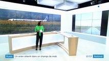 Russie : atterrissage d'urgence pour un A321 percuté par des oiseaux