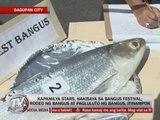 Kapamilya stars join Dagupan's Bangus Festival