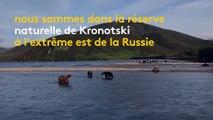 Russie : à cause d'une pénurie de saumons, des ours affamés ont élu domicile sur un circuit touristique
