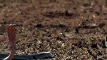 용산출장안마 -후불1ØØ%ョOiOE2997E5327{카톡USA59} 용산전지역출장마사지 용산오피걸 용산출장안마 용산출장마사지 용산출장안마 용산출장콜걸샵안마 용산출장아로마 용산출장⾨らみ
