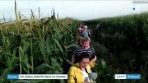 Russie : fait incroyable, un avion a atterri dans un champ de maïs