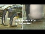 Au zoo de Berlin, un couple de pingouins gays adopte un œuf