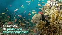 Tubbataha, l'un des récif les mieux préservés au monde