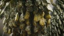 El precio del jamón ibérico, por las nubes