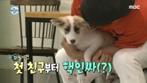 [HOT] Puppy friends 나 혼자 산다 20180816
