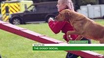 Doggy Social, Active Sunderland's Summer Fest & Festival Of Agriculture!