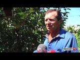Me sytë nga emigracioni! Fermerëve lushnjarë u mbeten fruta-perimet nëpër fusha
